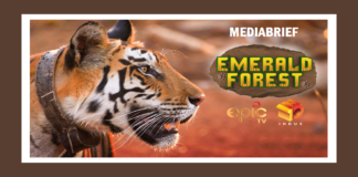 image-Emerald Forest – An EPIC Original celebrates the return of Tigers in Panna National Park Mediabrief