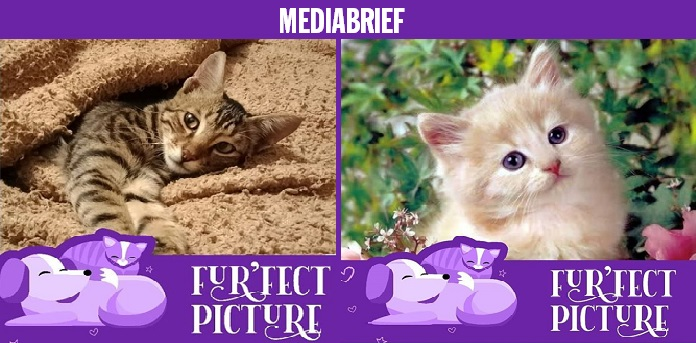 image-#PETPROJECT -campaign-from-Do-Your-Thng and Pet Influencers-MediaBrief