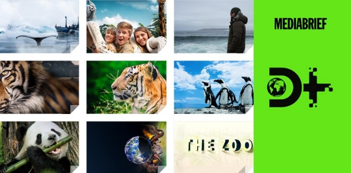 image-The Zoo on Discovery Plus-MediaBrief